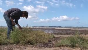 René Redzepi foraging